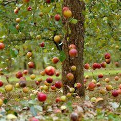 Falling Apple's