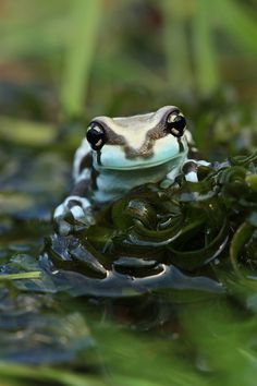 My very own pond by Angi Nelson