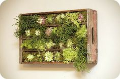 Succulents grown in an old coke bottle crate.