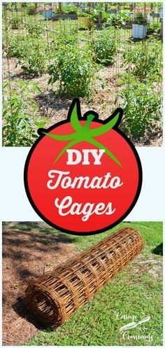 Complete instructions on how to make your own sturdy tomato cages that will last for years
