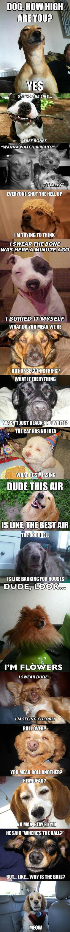 How High Are You Dog? – 16 Pics