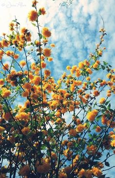 yellow flowers and blue skies #hipster