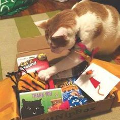 27 Wonderful Christmas Gifts To Give Your Cat