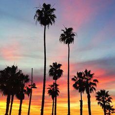 That palm tree life.