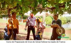 SENAR/SEBRAE REALIZAM CURSO DE PREPARAÇÃO DE UVAS NA REGIÃO DE FRANCA