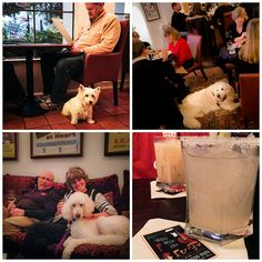 Tips for visiting dog friendly Carmel, California. A guide to hotels, restaurants, and things you can do with your dog in Carmel-by-the-Sea. Dog Boarding Near Me, Dog Shots, Carmel California, Carmel By The Sea, Can Dogs Eat, San Diego Zoo, Guide Dog, Aggressive Dog, Camping Spots