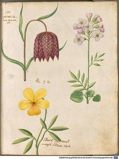 Image 00163 Hortulus Monheimensis