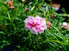 The delightful flowers