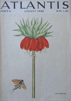 CORONA IMPERIALIS 1938 Farbdruck antik antique print Lithografie Kaiserkrone