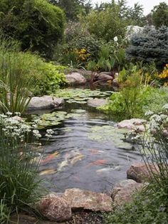 Put in a Pond Create a soothing garden oasis that delights the senses: refreshing drinks; seed for birds; nectar for bees and butterflies; and hiding places for fish, frogs, and other water-loving wildlife. a successful wildlife habitat with plantings -i Pond Landscaping, Ponds Backyard, Garden Ponds, Backyard Ideas, Natural Pond, Natural Garden, Pond Fountains, Outdoor Fountains, Pond Waterfall