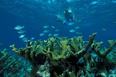 From gin-clear North Florida springs to vibrant and colorful coral reefs in the Florida Keys, here are 10 of the best Places to Snorkel in Florida. Florida Keys, Florida Springs, Visit Florida, South Florida, Varadero, Cozumel, List Of National Parks, Biscayne National Park, Underwater Caves