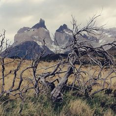 "Climão ""La Bruja de Blair"" em Torres del Paine.   . . . #chile #VisitChile #Chiletravelrepost #torresdelpaine #patagonia #nature #natureza #naturaleza #mountains #montanhas #bestplacestogo #bestvacations #cities #city #travelphotography #vacaciones #viajar #viajando #instatravel #lovetravel #passportready #travellinggram #wanterlust #viajeros #viagens #viaggio #instatraveling #mytravelgram #travelgram #sundaycooks"