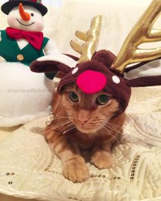 """Adorable """"Christmas Cats of Instagram"""" Get Into the Holiday Spirit Christmas Cats, Vintage Christmas, Photo Chat, Cat Costumes, Cat Gifts, Cat Lady, Cats Of Instagram, Scooby Doo, Reindeer"""