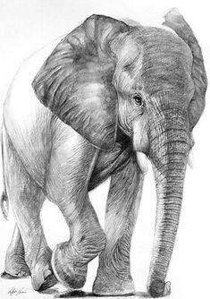 Black & White Elephant Painting Quality cotton Canvas wall home decor Elephant Sketch, Elephant Love, Elephant Art, White Elephant, Elephant Drawings, Animal Sketches, Animal Drawings, Pencil Drawings, Art Drawings