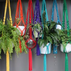 Macramé Plant Hangers in assorted bright colours