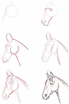 Drawing - Horse head