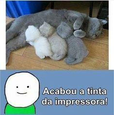Queria 1 gatinho Grey!
