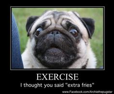 When pugs say what we're all thinking:  Dog meme, Funny dog, Exercise Motivation, pug pic