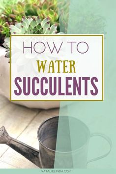 Learn how and when to water succulents (both indoor succulents and outdoor succulents) with this how-to guide. Remember that watering succulents properly is key to keeping them alive and looking beautiful! Watering Succulents, How To Water Succulents, Indoor Succulents, Propagating Succulents, Growing Succulents, Indoor Flowers, Succulents Diy, Low Maintenance Indoor Plants, Cactus Care