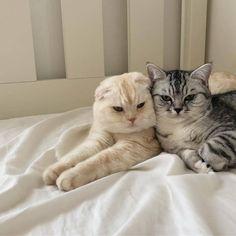Cute Baby Cats, Cute Little Animals, Cute Cats And Kittens, Kittens Cutest, Catty Noir, Cat Aesthetic, Japanese Aesthetic, Korean Aesthetic, Beige Aesthetic