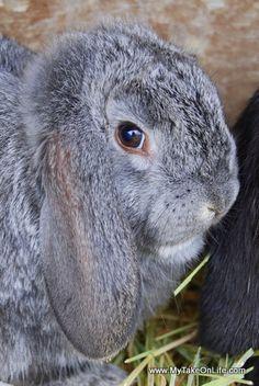 10 week old bunny