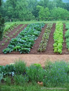 mysecretgarden colonial gardens part 42 monticello vegetable garden wide row planting