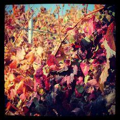 Wine Wine, Nature, Photos, Painting, Art, Art Background, Naturaleza, Pictures, Painting Art