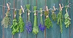 Top 10 Medicinal Plants That You Can Grow Yourself... - http://www.ecosnippets.com/gardening/medicinal-plants-you-can-grow/