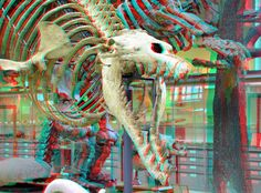 National Museum of Natural History Paris 3d Foto, 3d Pictures, 3d Glasses, National Museum, Natural History, Dinosaurs, Red And Blue, Paris, Drawings