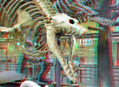National Museum of Natural History Paris 3D