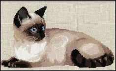 Riolis - Tammy It looks just like our Siamese, Ayame!