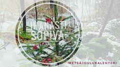 Metsäjoulukalenteri eli metsä /luontoteemainen joulukalenteri ystävyydestä, tunteista ja hyvästä mielestä.