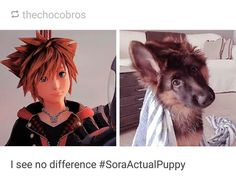 Sora is an actual puppy Kingdom Hearts 3, Final Fantasy, Funny Clean, Clean Memes, Videogames, Anime, Fandoms, Destiny, Fight Fight