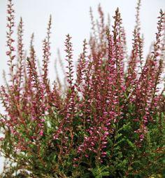 Kwiaty z Wichrowych Wzgórz...