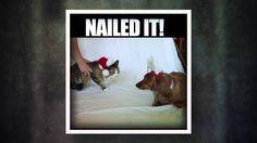 Nailed it! TLC's 5 & 5 with Iaso™ Tea