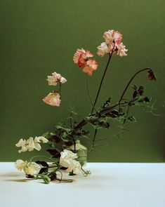 Painterly Photographs of Solitary Flower Stems | AnOther