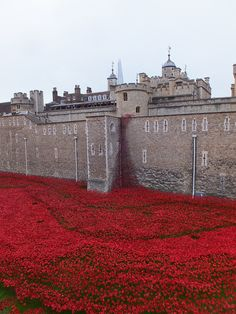 Poppies pouring from the Tower of London - November 2014 Tower Of London, Poppies, November, Louvre, Explore, Building, Travel, November Born, Viajes