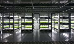 Spread says it will open the fully automated farm with robots handling almost every step of the process