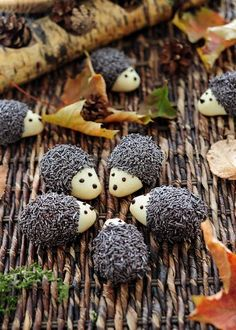 """Jež keks""--adorable hedgehog cookies.  Wish I could read the recipe, which appears to be in an Eastern European language."
