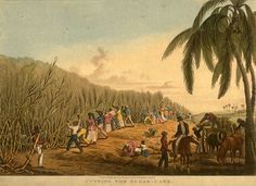 The rise of sugar cane plantations in the 18th Century, particularly on the French islands of Martinique and Saint-Domingue, allowed impoverished French noblemen the opportunity to rebuild their wealth.      Many white plantation owners took African mistresses. Soon, the islands were filled with mulatto children. Some were treated kindly by their fathers and even afforded a superior education; others suffered the pain of not being accepted by either race.