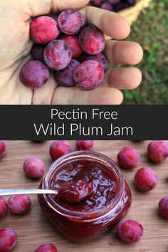 A deliciously tart, wild plum jam perfect for using as a breakfast preserve or as a condiment on cheese platters. Includes directions for using both wild plums or commercially grown fruit. Plum Jam Recipes, Jelly Recipes, Plum Recipes Breakfast, Cherry Plum Recipes, Wild Plum Recipe, Sauces, Jam And Jelly, Canning Recipes, Canning Tips
