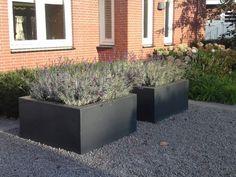 Zwartgrijze plantenbakken van polyester, in een voortuin. geplaatst in basalt split en aangeplant met lavendel