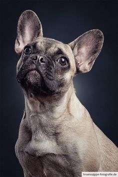Dog Portraits 2 by Daniel Sadlowski