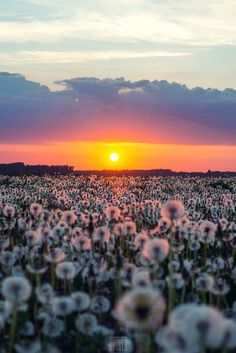 Army of dandelions by Dmitry Doronin, on 500px.