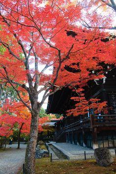 shinnyodou, kyoto, japan