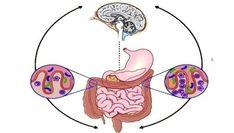 """Vive Sana: La microbiota intestinal o el """"cerebro de las emociones"""""""