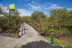 Image result for wetland boardwalk city - http://www.weekendnotes.com/brisbane-wetlands/