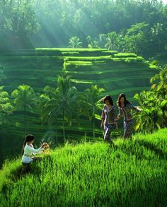 The Rice terraces, Ubud, Bali - Indonesia. Denpasar, Beautiful World, Beautiful Places, Beautiful Pictures, Lombok, Ubud, Places To Travel, Places To See, Village Photography