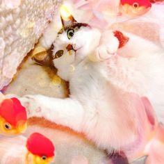 @kigousi-#cameran #cameranapp kitten with goldfish