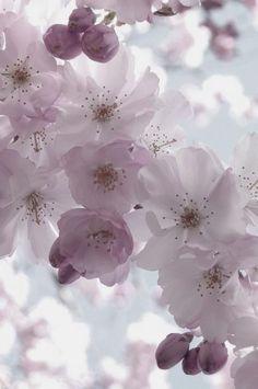 so serene and beautiful--flowers like poetry